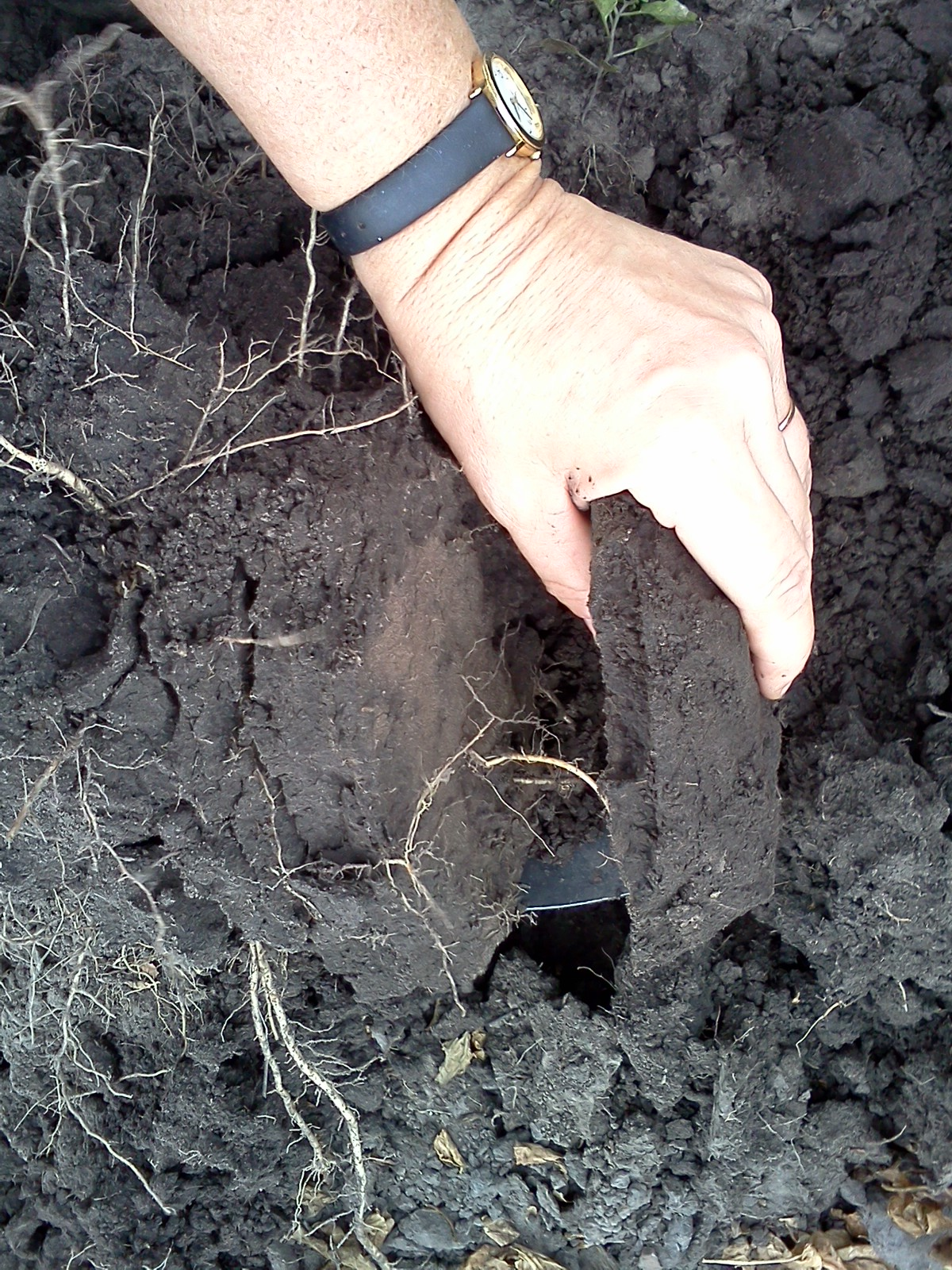 Tomatoes and soil compaction onvegetables for Soil compaction