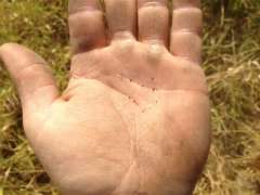Figure 3. Pigweed seed in man's hand  http://talk.newagtalk.com/forums/thread-view.asp?tid=340200