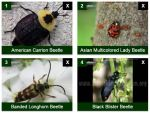 Insect Identification for the Casual Observer