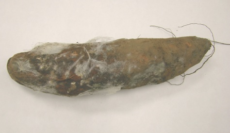 "Figure 1 - Sweet potato with symptoms of Rhizopus soft rot.  Note the distinctive ""whiskery"" growth."