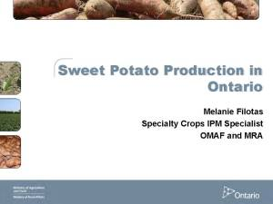 Sweet Potato Production in Ontario (pdf)