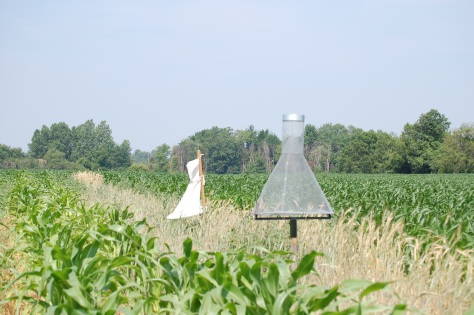 Two different types of pheromone traps used for corn earworm. The heliothis trap (rear) and the hartstack trap (front).