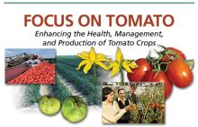 PMN Focus On Tomato