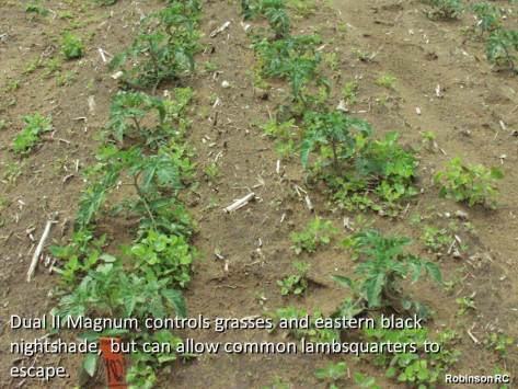 Weed control with Dual II Magnum