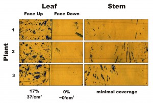 Figure 1 – Water-sensitive papers from three plants sprayed in Condition 1. Percent coverage and droplet density are calculated for the leaves, and a visual inspection is made of the stems.