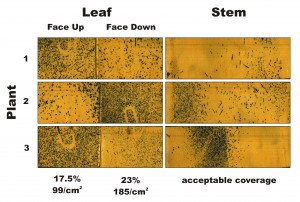 Figure 2 – Water-sensitive papers from three plants sprayed in Condition 2. Percent coverage and droplet density are calculated for the leaves, and a visual inspection is made of the stems.