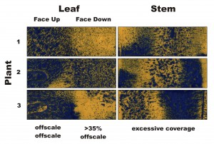 Figure 3 – Water-sensitive papers from three plants sprayed in Condition 3. Percent coverage and droplet density are calculated for the leaves, and a visual inspection is made of the stems.