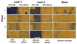 Figure 4 – Water-sensitive papers from three plants sprayed in Condition 3, ~5 weeks later. Percent coverage and droplet density are calculated for the leaves, and a visual inspection is made of the stems.
