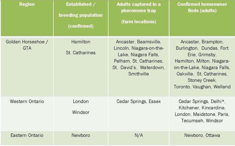 BMSB Findings in Ontario