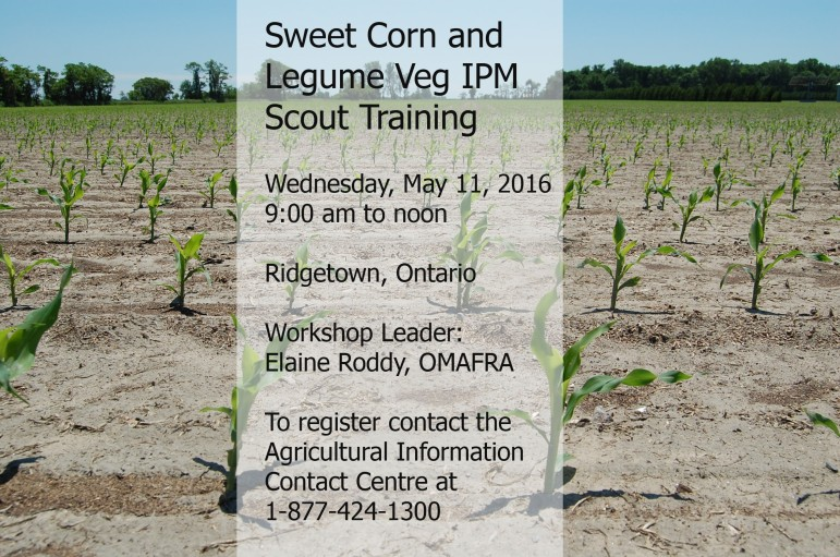 Sweet Corn and Legume Veg IPM Training. May 11, 9:00 am to noon. Ridgetown, ON. To register contact the Agricultural Information Contact Centre at 1-877-424-1300.