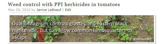 Weed control with PPI herbicides in tomatoes