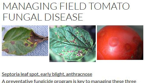 Managing field tomato fungal disease