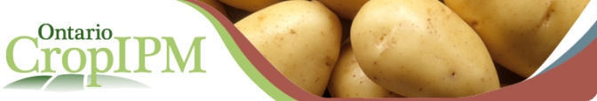 Potato module now available on Ontario Crop IPM