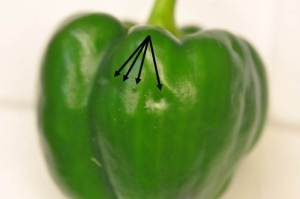Figure 3: Egg-laying scars (dimples) on pepper fruit