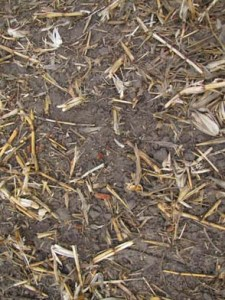 50% residue cover in the fall
