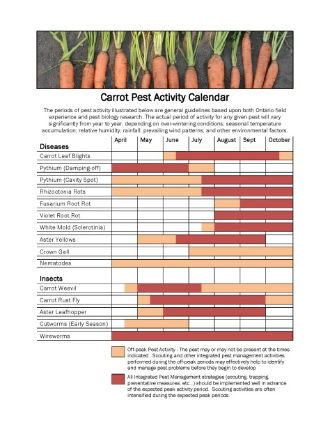 Carrot Pest Activity Calendar