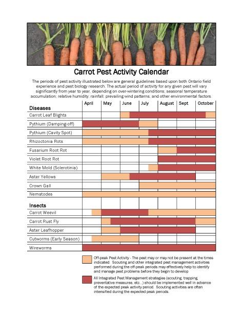 Carrot Pest Activity Calendar