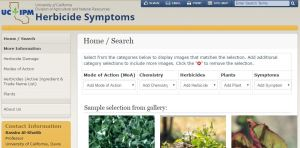 UC Herbicide Symptoms