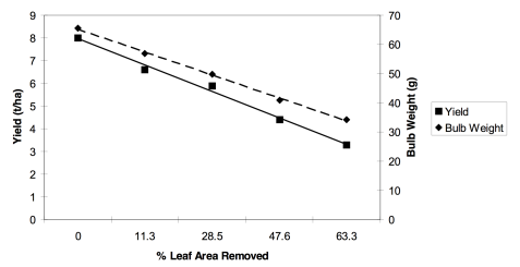 Influence of leaf removal on yields and bulb weights of garlic cv 'Music'. (Zandstra, 2000)